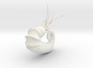 Audouliceras - 6cm in White Strong & Flexible