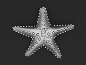 Starfish in Raw Aluminum