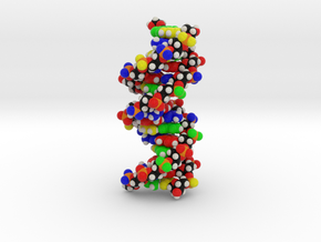 "DNA Molecule Model ""Emily"", Standard in Full Color Sandstone"