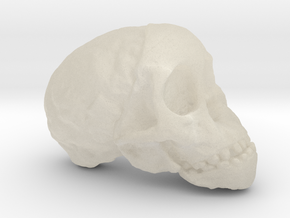 RadioLab Taung Child Skull Via Shootdigital 2014.0 in White Acrylic