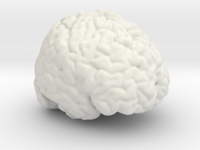 Life Size Brain from MRI in White Strong & Flexible