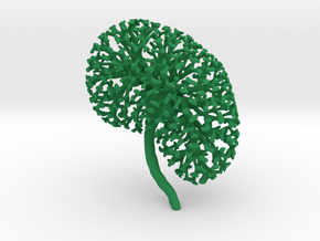 Small Kidney Ureteric Tree (Small) in Green Strong & Flexible Polished