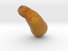 The Yellow Cucumber in Full Color Sandstone