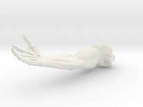 AnatomyR-arm in White Strong & Flexible