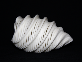Natural Twisted Shell in Sandstone