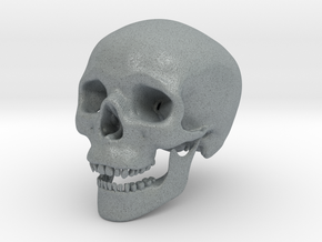 Human Skull -- Small in Polished Metallic Plastic