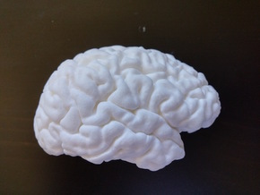 The right hemisphere of the brain - half scale in White Strong & Flexible Polished