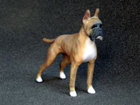 Red Fawn Boxer in Full Color Sandstone