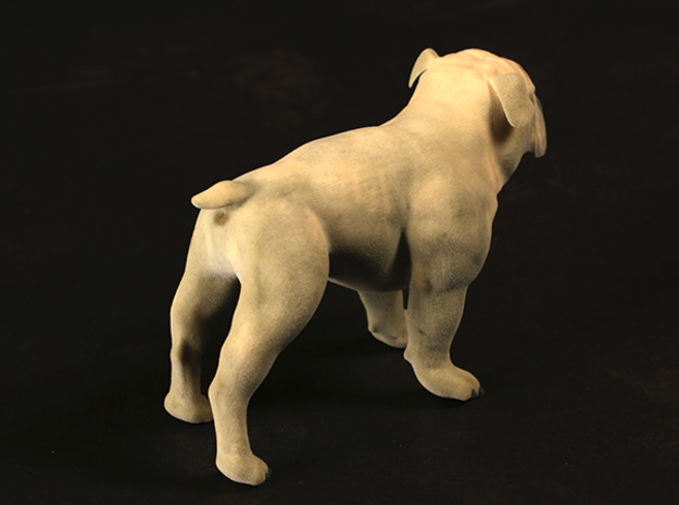 Bulldog XXL Full Color Sandstone 3d printed XXL
