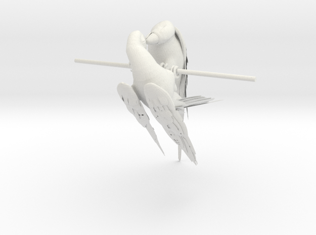 Macaw & Parrot 3d printed