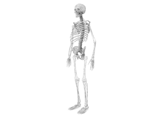 Life Size Poly Spline - Skeleton 3d printed 6ft. Full Skeleton in White - All parts available in store