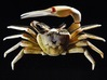 Articulated Fiddler Crab (Uca pugilator) 3d printed Shown painted with acrylics
