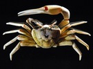 Articulated Fiddler Crab (Uca pugilator) in White Strong & Flexible