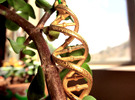 DNA Necklace in Polished Gold Steel