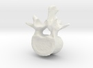 L2 lumbar vertebral body in White Strong & Flexible