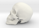 Detailed Human Skull (Life sized) in White Strong & Flexible