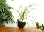 A burgeoning capsule Planter with large Pot
