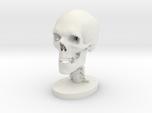 1/4 Scale Human Skull