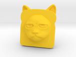 Bread Cat!  AKA Toaster Kitty