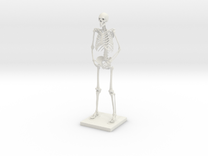 "10"" Desktop Skeleton in White Strong & Flexible"