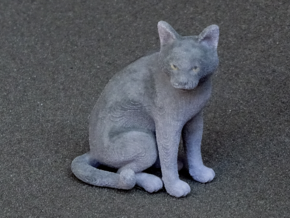 Sitting Gray Chartreux in Full Color Sandstone