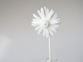 Picked Daisy 2 in White Natural Versatile Plastic
