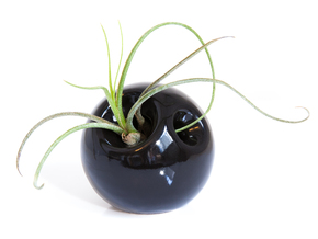 Sphera Planter in Gloss Black Porcelain