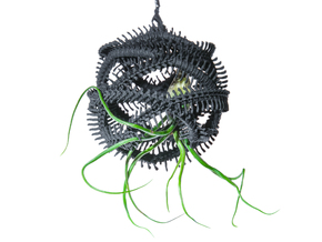 Radiolaria Vertebralia Planter in Black Strong & Flexible