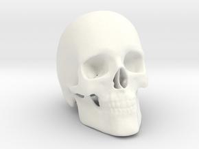 Human Skull in White Processed Versatile Plastic