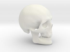 Skull Real in White Natural Versatile Plastic