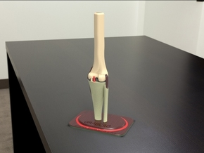 knee joint in White Strong & Flexible