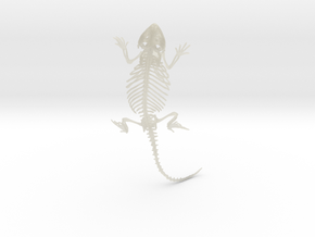Bearded Dragon Skeleton - 4 Inches in Transparent Acrylic