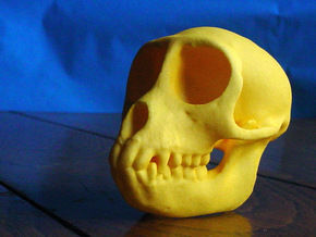 SPIDER MONKEY SKULL - ACTUAL SIZE in Yellow Processed Versatile Plastic