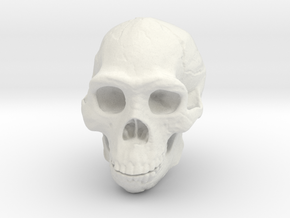 Real Skull : Homo rectus (Scale 1/2) in White Strong & Flexible