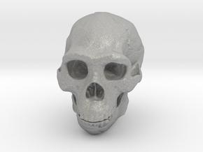 Real Skull : Homo erectus (Scale 1/2) in Aluminum
