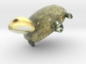 Turtle in Glossy Full Color Sandstone