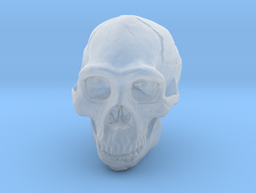 Real Skull : Homo erectus (Scale 1/4) in Smooth Fine Detail Plastic