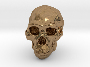 Real Skull : Homo erectus (Scale 1/4) in Natural Brass