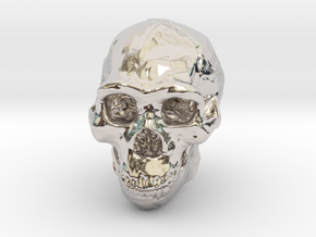 Real Skull : Homo erectus (Scale 1/4) in Rhodium Plated Brass