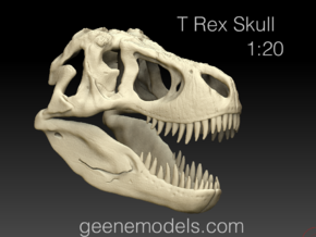 T Rex Skull 1:20  in White Strong & Flexible