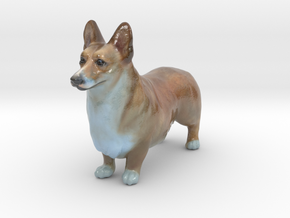 Pembroke Welsh Corgi in Coated Full Color Sandstone