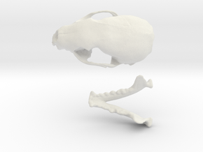 Skull of a stone marten in White Natural Versatile Plastic