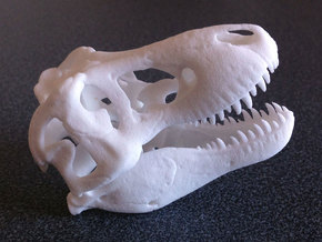 Tyrannosaurus - dinosaur skull replica in White Strong & Flexible