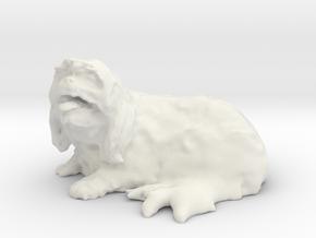 Shih Tzu 001 50mm in White Natural Versatile Plastic