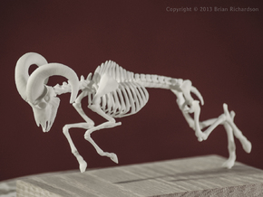 Bighorn Sheep Skeleton in White Natural Versatile Plastic