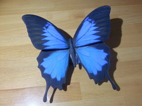 Blue Butterfly in Full Color Sandstone