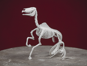 Hippocampus Skeleton in White Natural Versatile Plastic