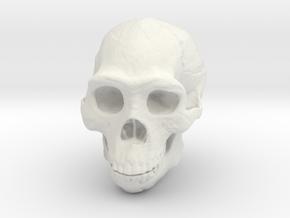 Lanyard : Real Skull (Homo erectus) in White Strong & Flexible