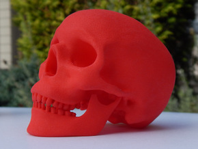 Human Skull -- Small in Red Processed Versatile Plastic