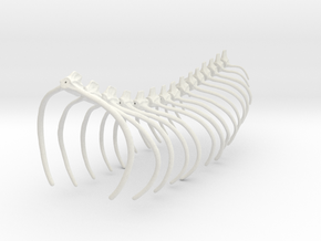 Komodo Spine Rib Cage 1:5 Scale in White Strong & Flexible